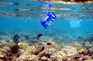 Basura mar Playa del carmen