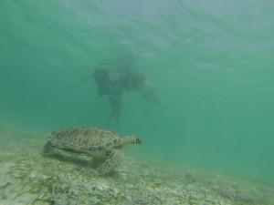 Explora el Corazón de la Riviera Maya - snorquel