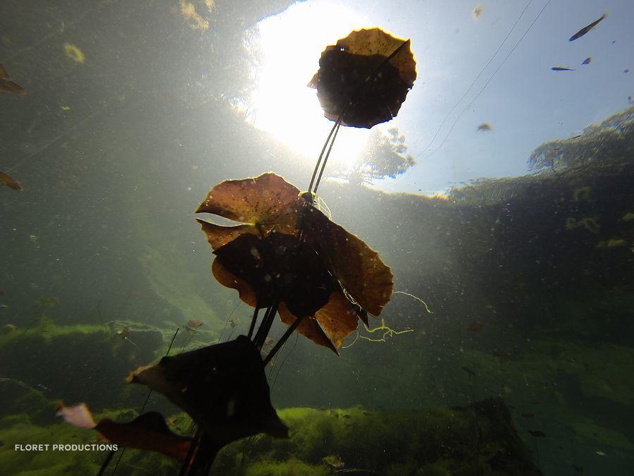 Para Conocer : Cenotes cerca de Playa del Carmen