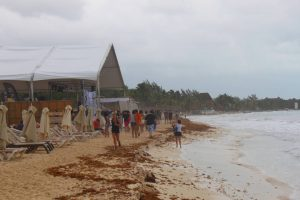 Sargazo en Playa del Carmen - Viva Playa