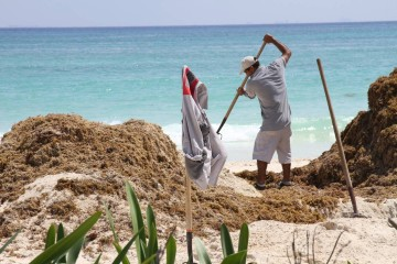 ¿Qué le pasó al mar de Playa del Carmen?