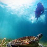 """Akumal means: """"place of the turtles"""" and like its name says it, it is famous for offering the unrivaled experience of swimming in the same place where different types of turtles"""