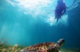 "Akumal means: ""place of the turtles"" and like its name says it, it is famous for offering the unrivaled experience of swimming in the same place where different types of turtles"