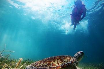 Akumal - lUGAR DE LAS tORTUGAS, Playa del Carmen, Riviera Maya
