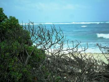 Xcacel: El secreto mejor guardado de la Riviera Maya
