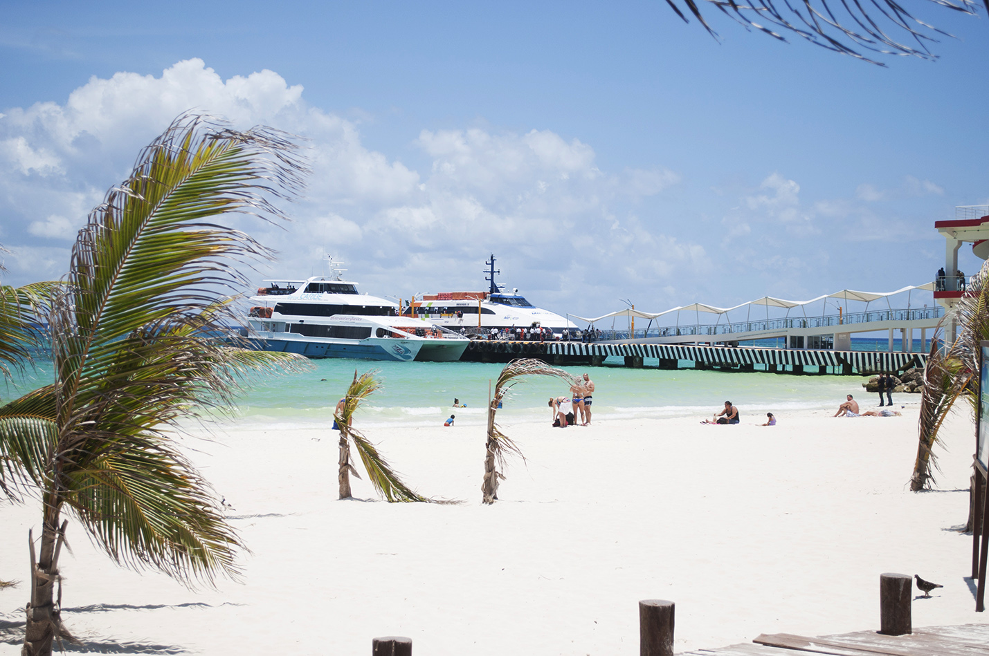 Where to take the ferry to Cozumel in Playa del Carmen?