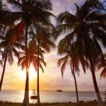 Isla Mujeres - MUSA - Viva Playa