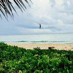 Playacar Playa del Carmen - Viva Playa