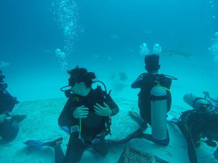 Buceo con Tiburones Playa del Carmen